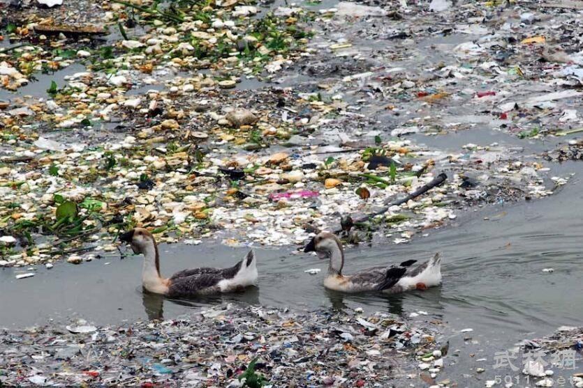 水污染更加明显